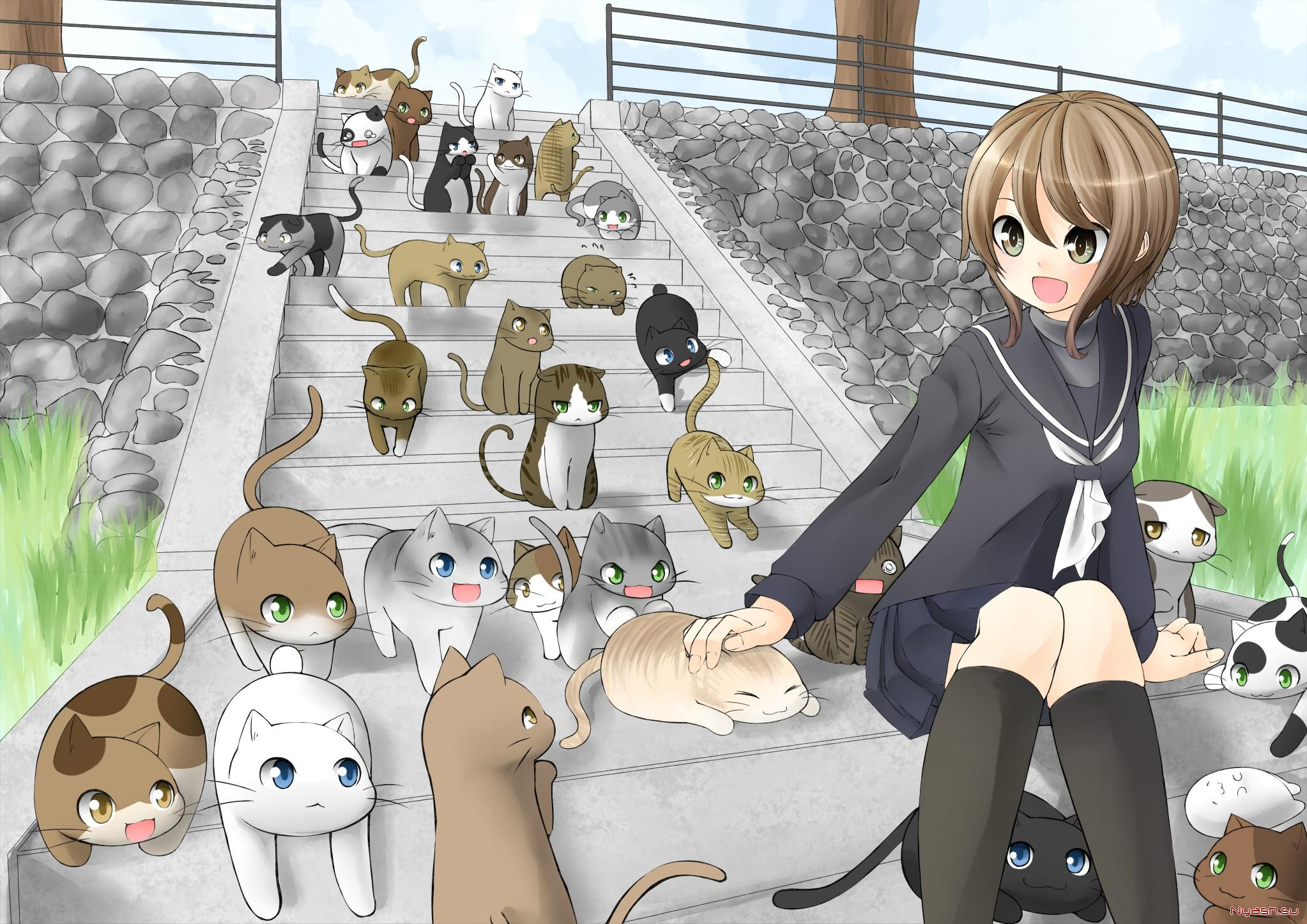 Открытки, картинки с котиками аниме с прикольными